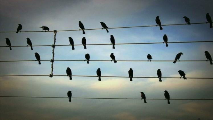 Ptaki na drutach wysokiego napięcia