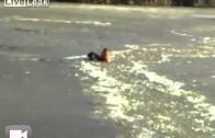 Właściciel ratuje psa przebijając się przez lód