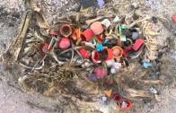 Co się dzieje gdy ptaki jedzą śmieci?