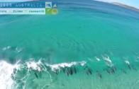 Delfiny surfujące grupowo na fali