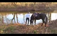 Koń po raz pierwszy wchodzi do wody.