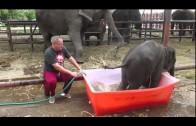 Słoniątko bierze kąpiel.