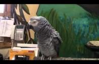 Einstein – genialna papuga